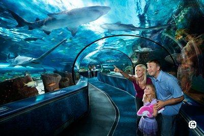 ripleys aquarium under sea view